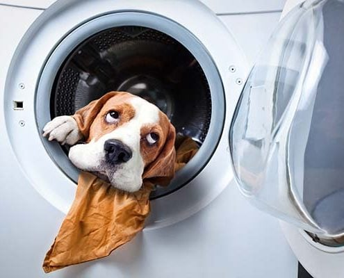 A dog thinks whether replace or repair appliance